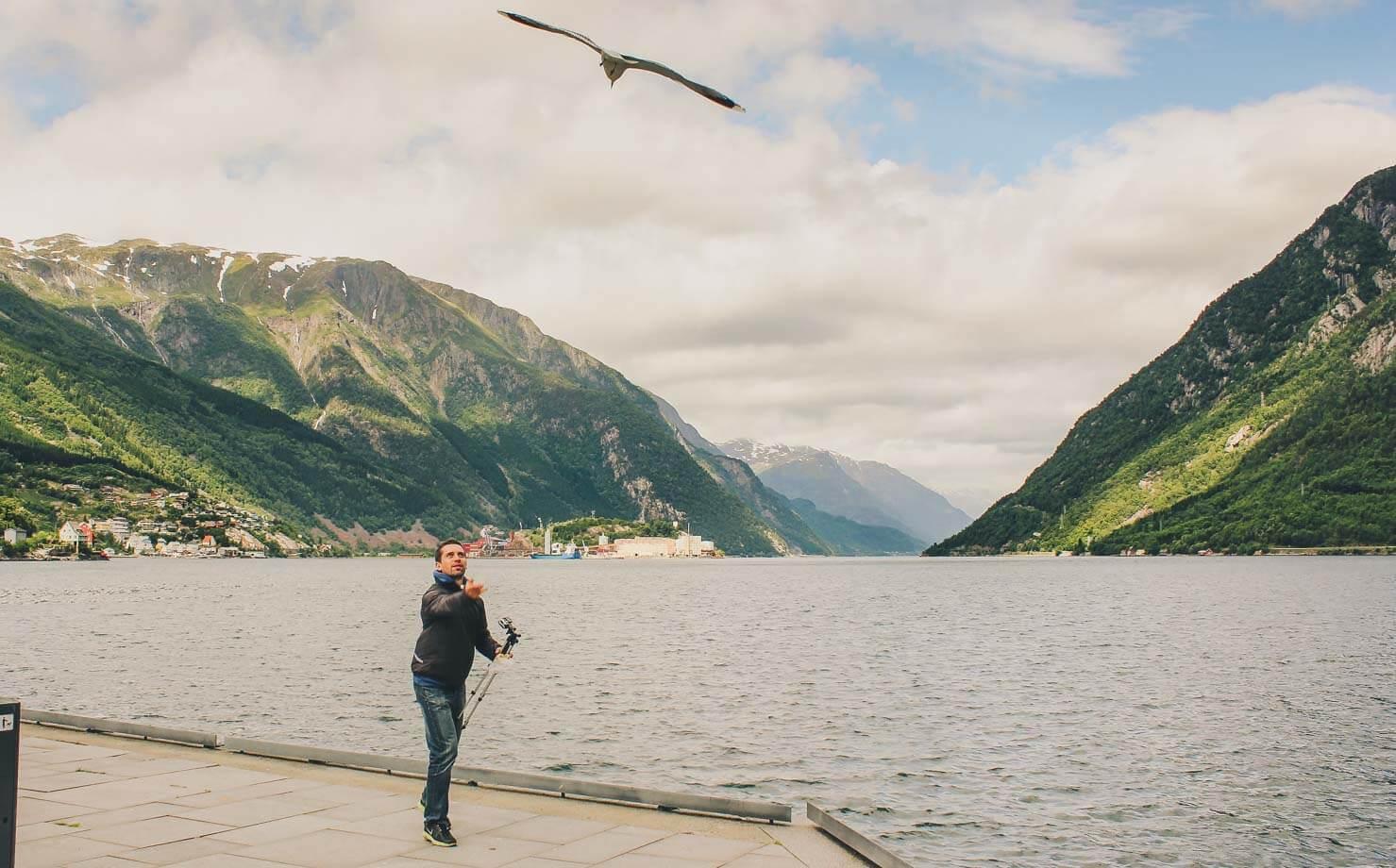 Trolltunga Hike Guide - Odda seagulls