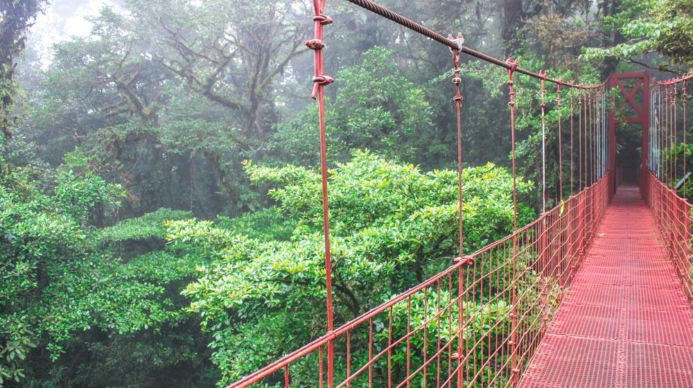 monteverde hanging bridge (1 of 1)