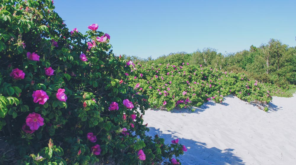lomma beach lund