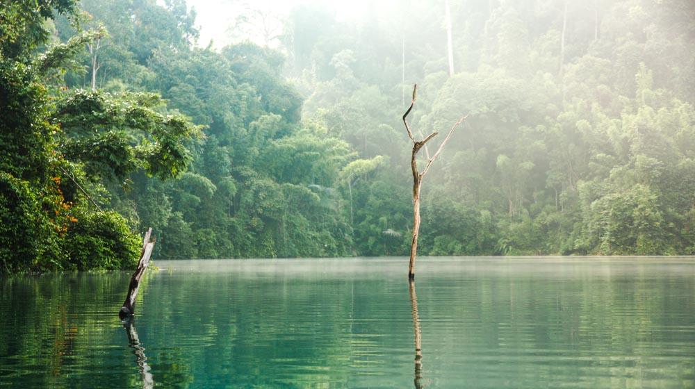 thai nature