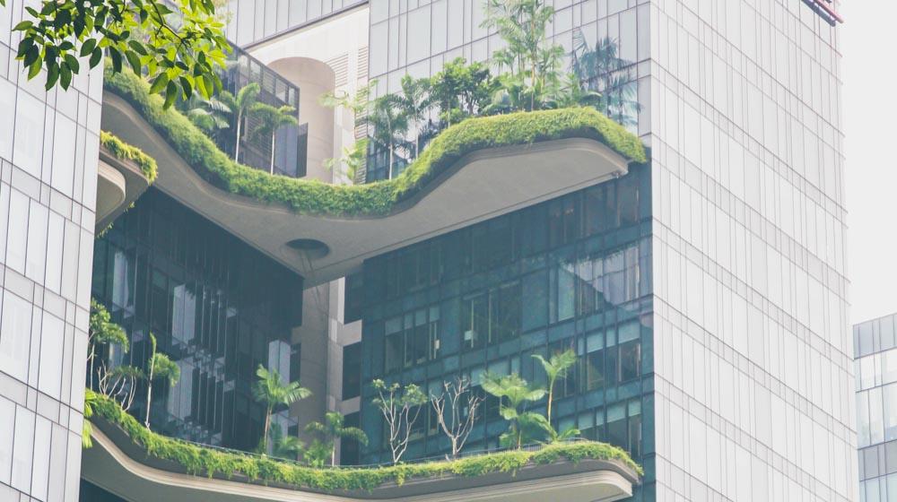 Singapore plants