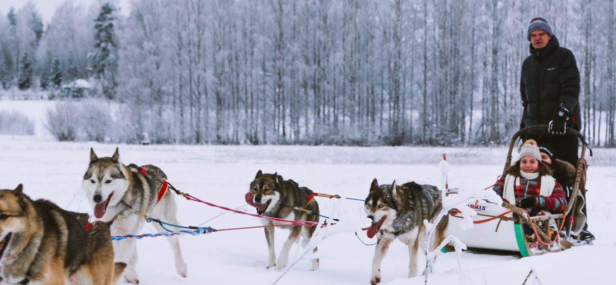 Where to go on husky safari near Helsinki  And the ethical side of dog  sledding business 5343e0596