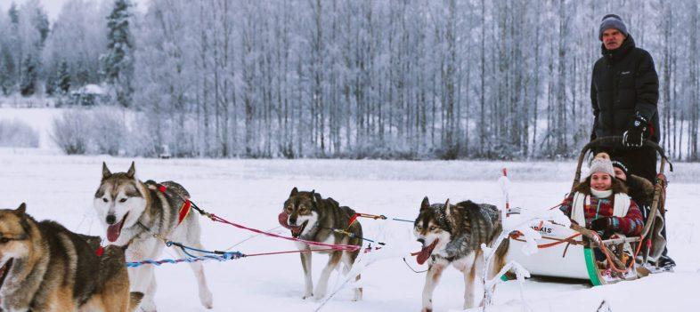 Where to go on husky safari near Helsinki? And the ethical side of dog sledding business