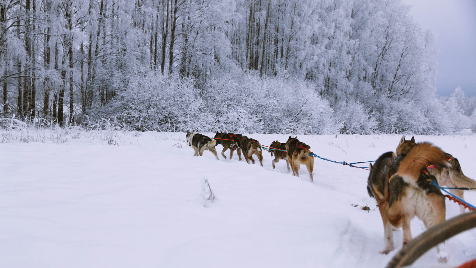 Day Trip from Helsinki: Husky Safari Finland Adventure
