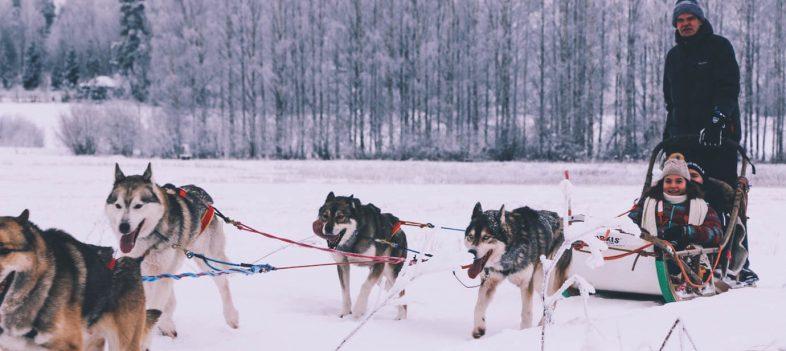 Unforgettable Husky Safari Finland Adventure Ride-2