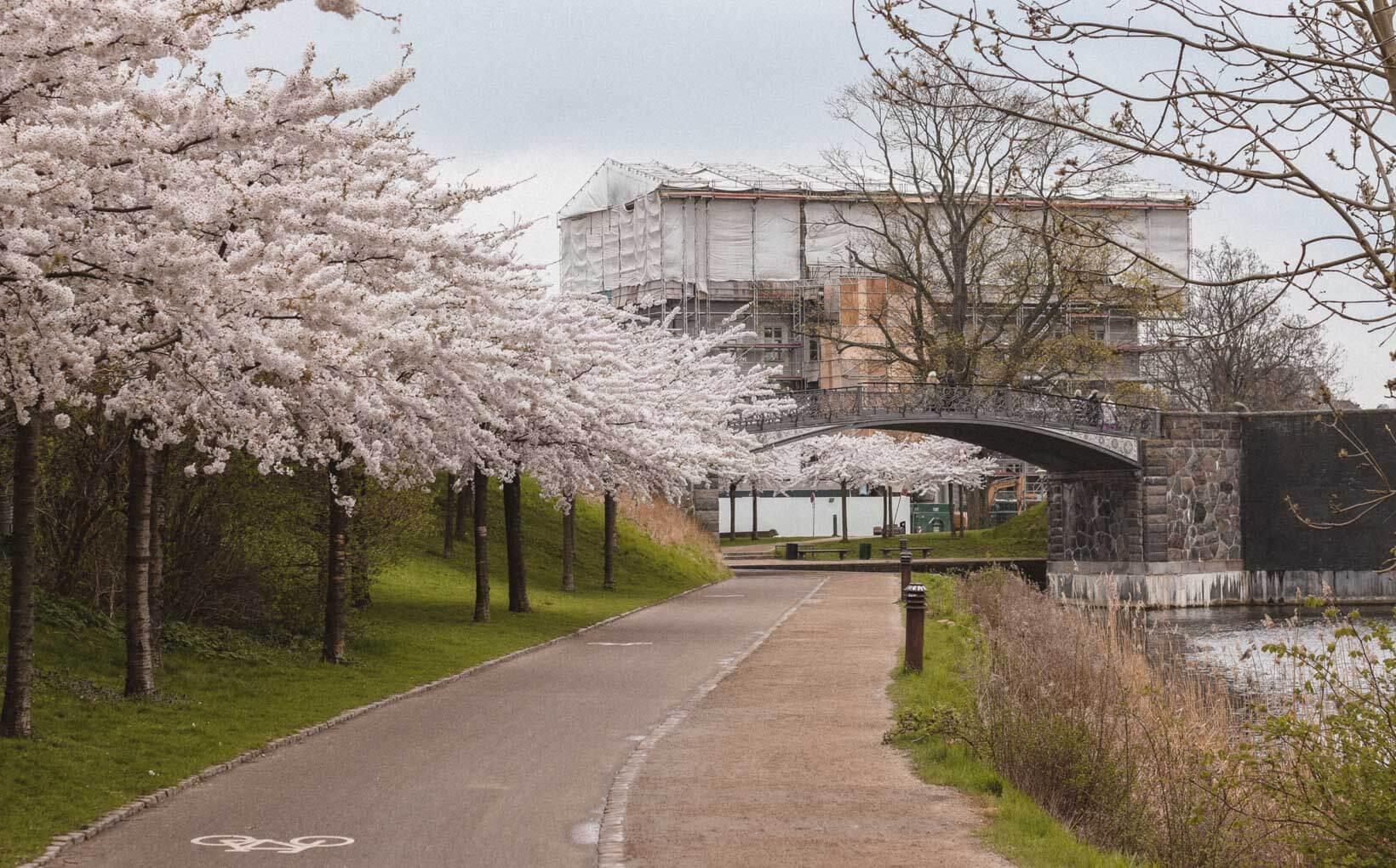 Langelinie Where to find cherry blossoms in Copenhagen_