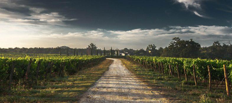 Tuscany Wine Tasting Tours