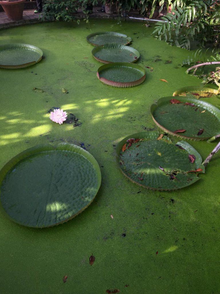 Botanical Gardens / One Day in Copenhagen Itinerary