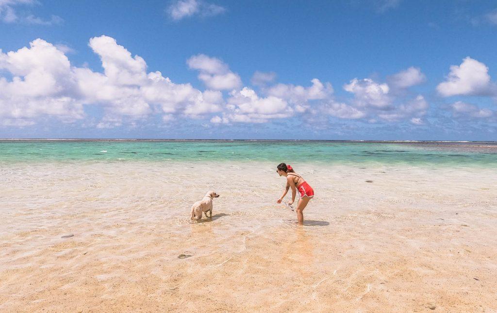 Stray-dogs-in-Rarotonga