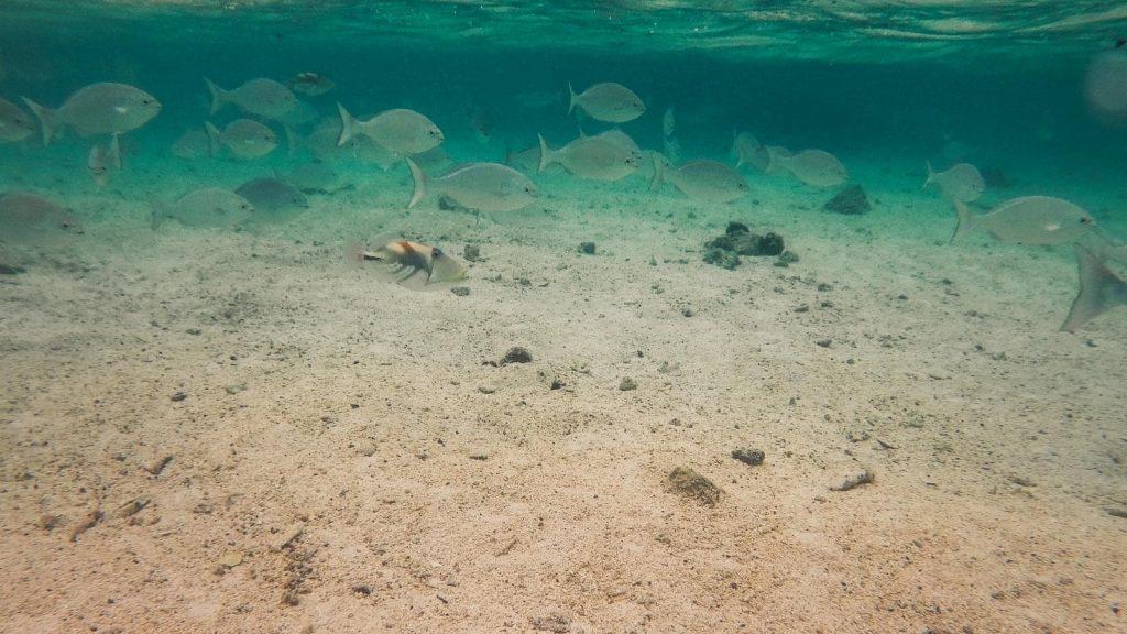 rarotonga-snorkeling