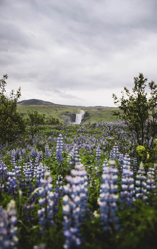 10-Days-Iceland-Itinerary-Skogafoss-2