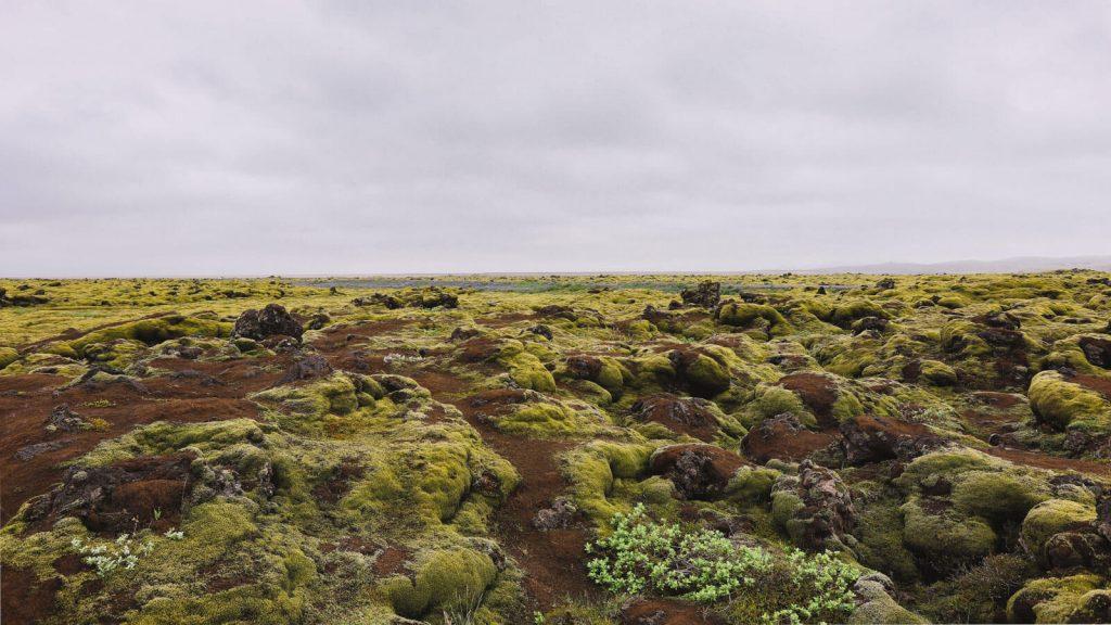 10 days Iceland itinerary:Eldhraun lava fields, Iceland
